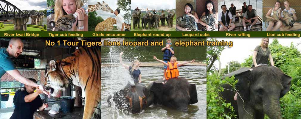 Tigers Safari Park open zoo Elephant Training Bath swim trek and Bridge on the River Kwai