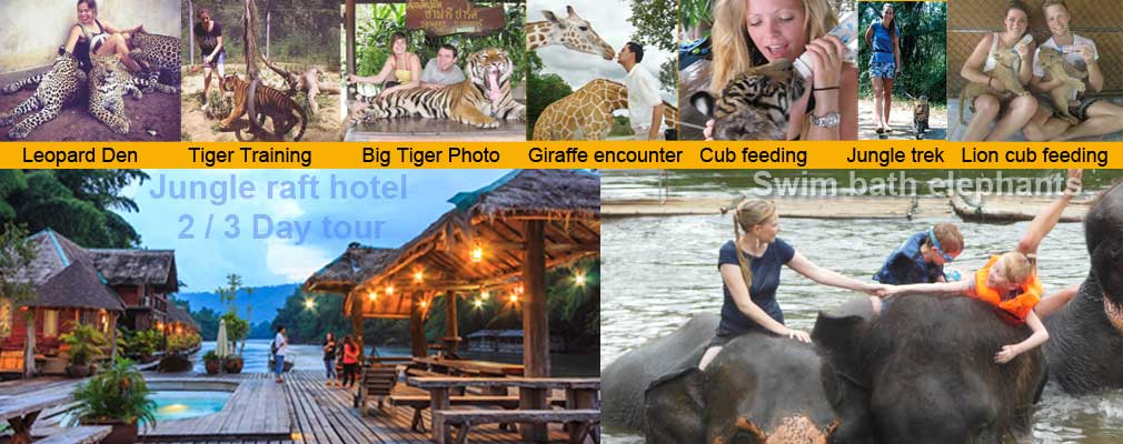 TH: Ultimate Jungle Tour with wild Animals Tigers Lions Leopards and a lot more.