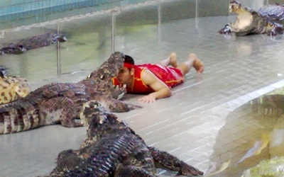 Crocodile Wreslting