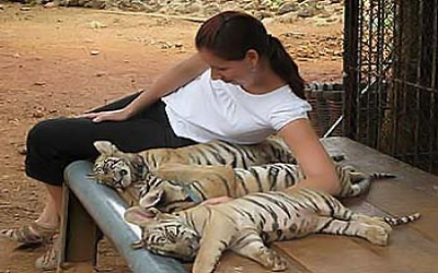 Lady With Cubs Tiger