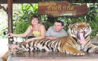 Photo with large Tiger