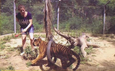 Tiger Training