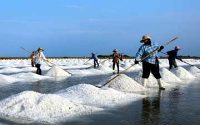 Salt Farms and Prawn farms