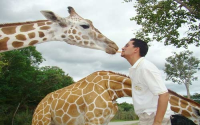 Giraffe encounter