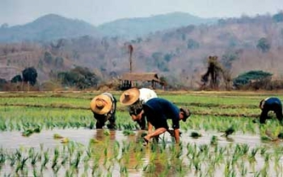 Breaking Work Thai paddy Field