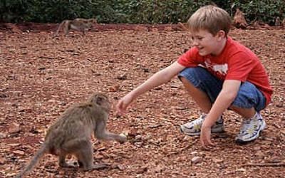 Boy feeds wild monkey