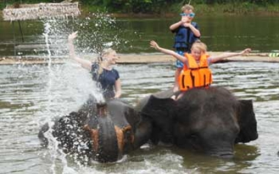 Elephant training swimminng