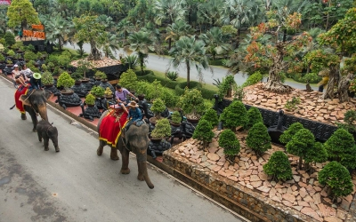 Nong Nooch view by elephant
