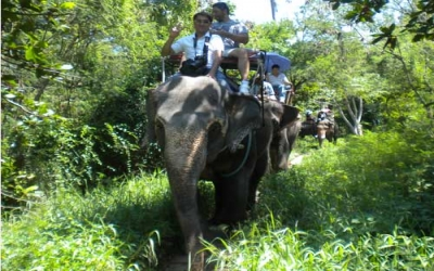 Elephant jungle trek