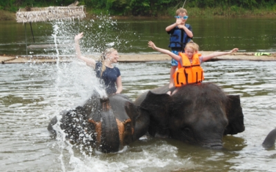 Elephant bathing and swimming