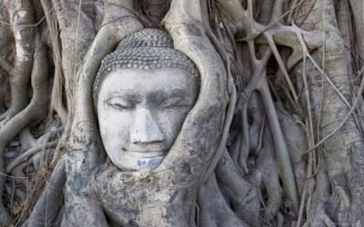 Buddha head grown into Tree roots