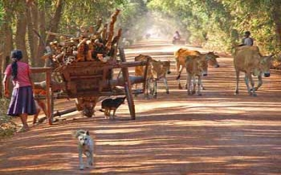 Cambodian country road